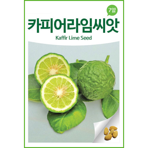how to grow kaffir lime from seed